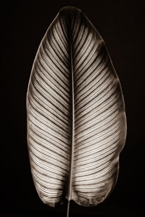 Leaf 2 - Image 0