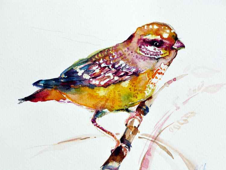 bird watercolour original illustration sketch