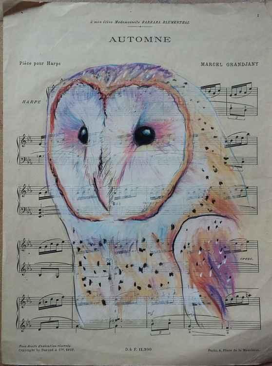 Barn Owl - 'Automne'