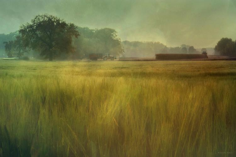 Harvest - Canvas 75 x 50 cm - Image 0