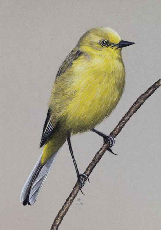"Original pastel drawing ""Yellow-headed Wagtail"" -"