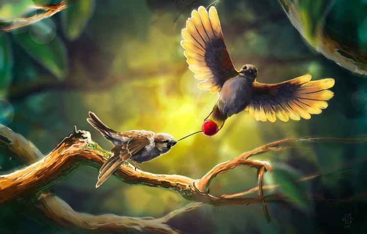 Birds fight