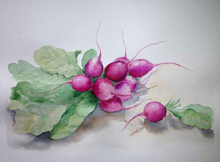 Watercolor still life with radish -