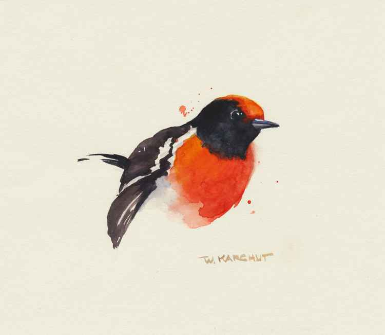 Red-capped Robin -