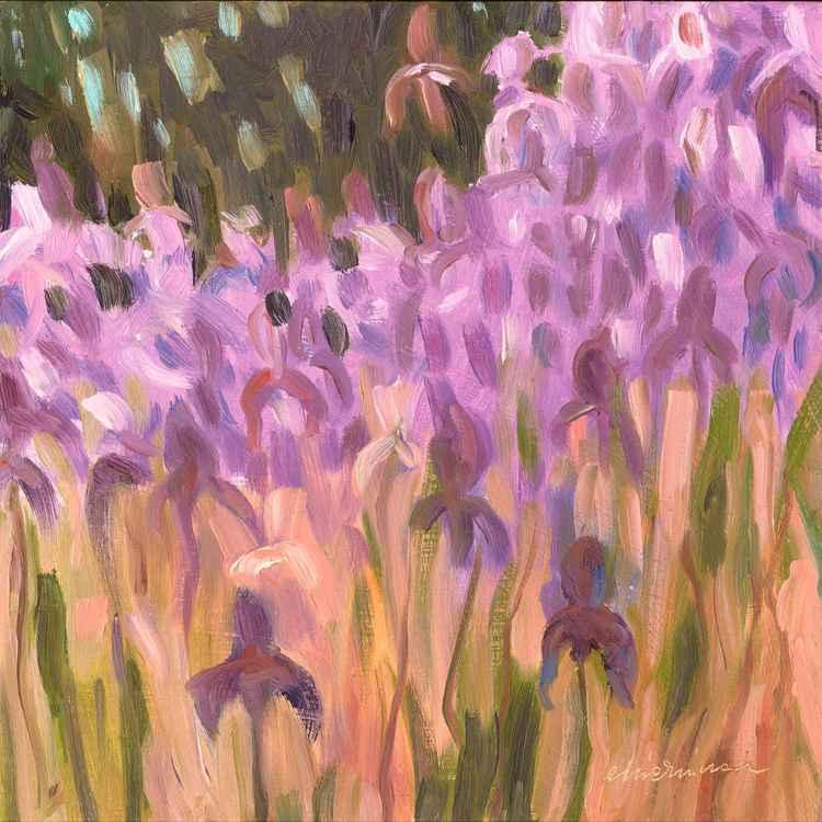 Irises 02 -