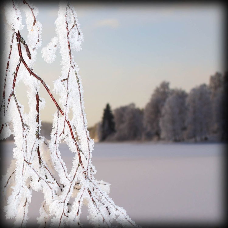 Frosted Lake - Image 0
