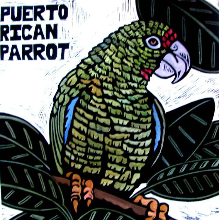 P is for PUERTO RICAN PARROT -