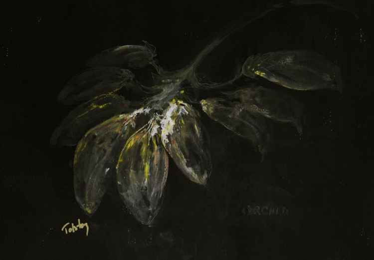 Orchid, in the Black -
