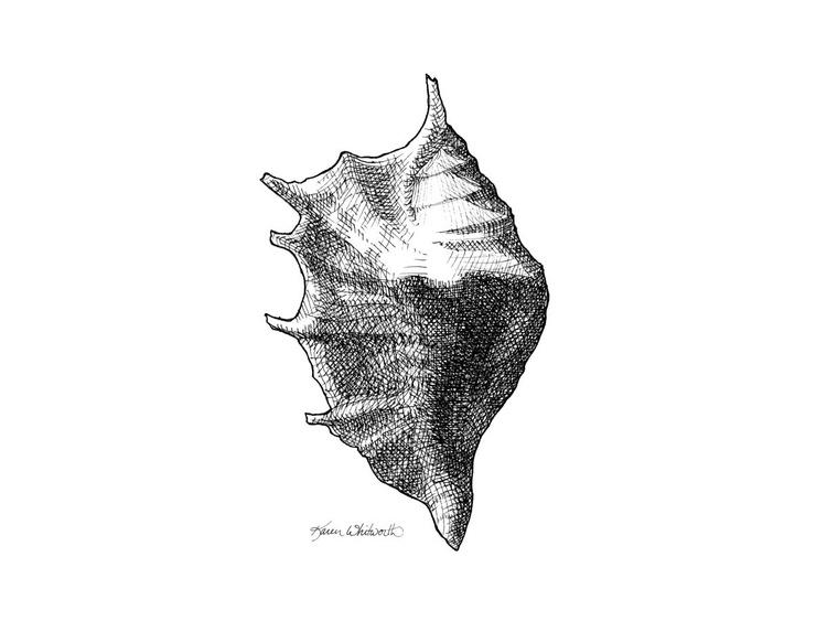 Seashell 1 Nautical Black and White Sealife Drawing - Image 0