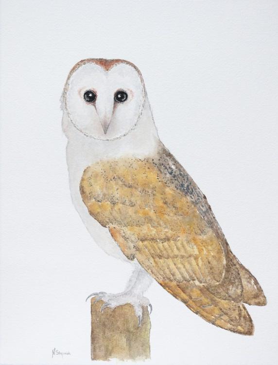 The barn owl (Tyto alba) - Image 0