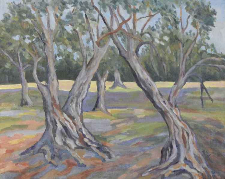 Olive Grove -