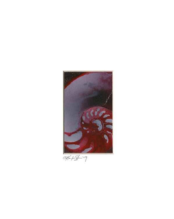 Sea Shell Watercolor Painting, Ocean - Nautilus Shell No. 952
