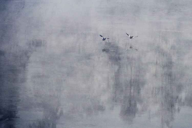 Dusk Flight -