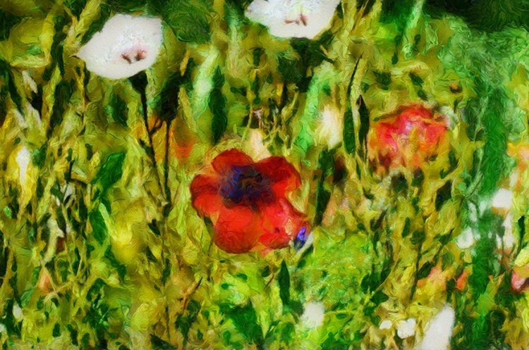 Field of flowers no 3 - Image 0