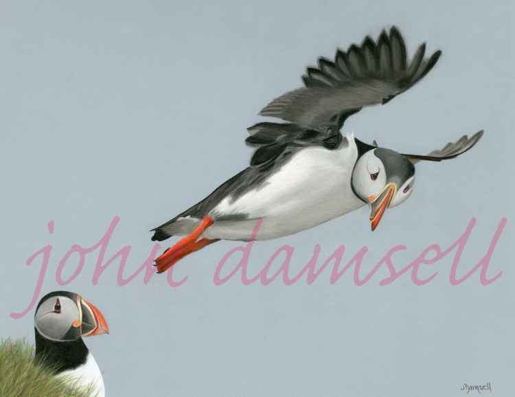 Puffin 'I can Fly'