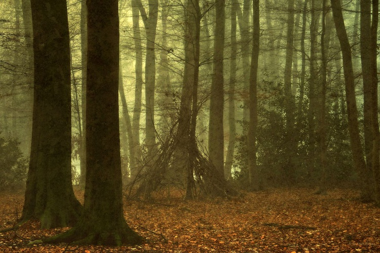 Magic of the Forest - Image 0