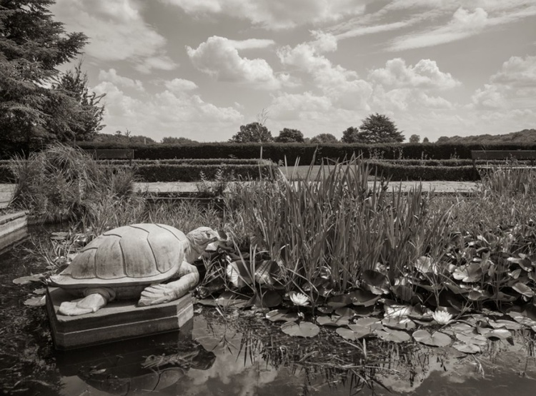 The Pond - Image 0
