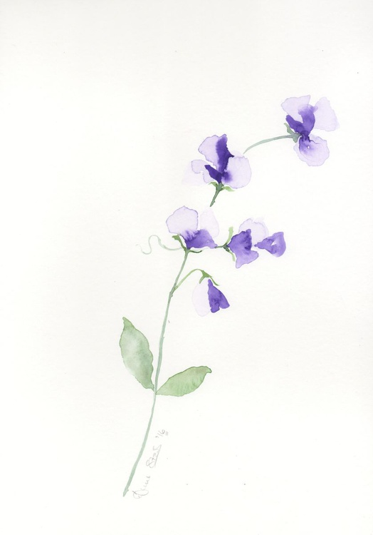 Purple Sweetpeas - Image 0