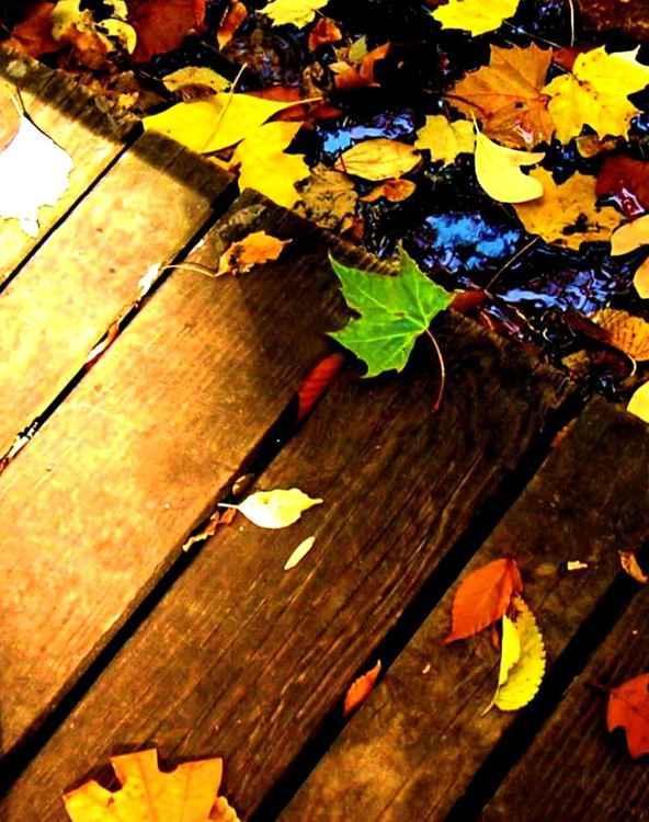Leaf study 3 -