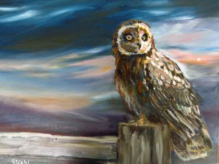Night Owl -