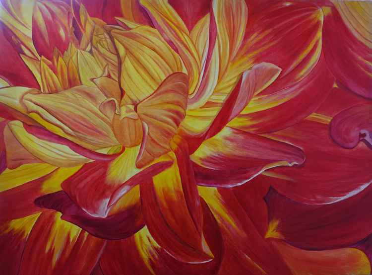 Red and Yellow Dahlia -