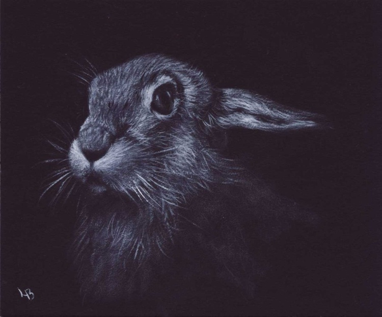 European Hare - Image 0