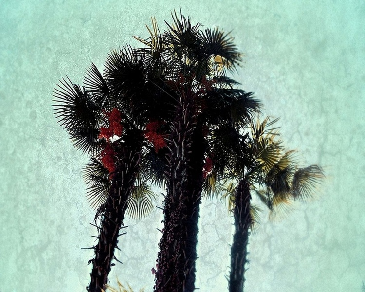 Palms in bloom - Image 0