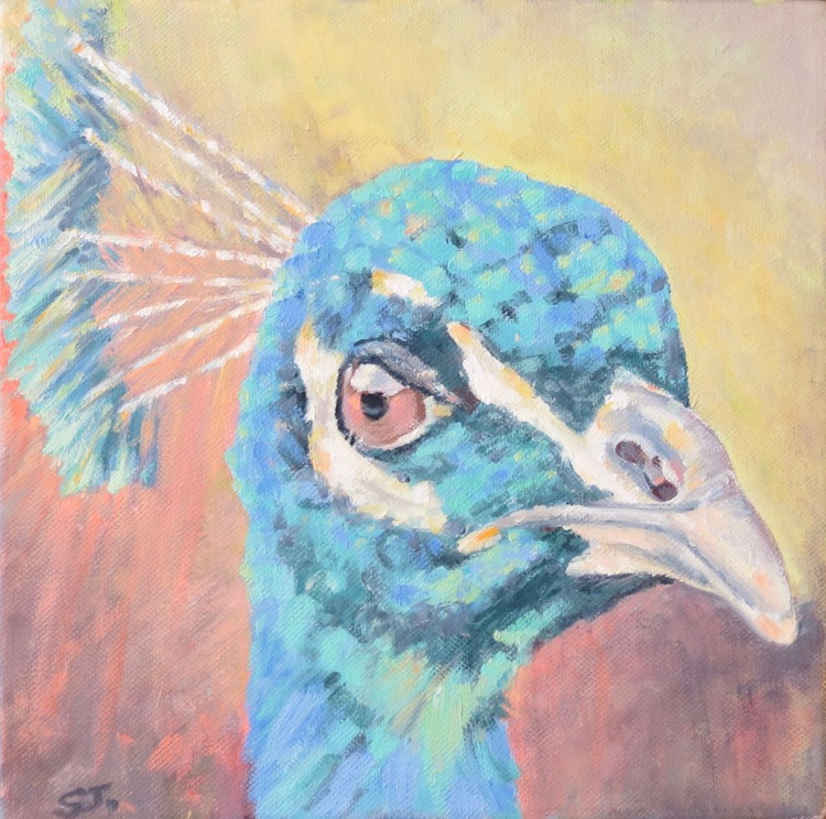 Peacock, All Seeing - Image 0