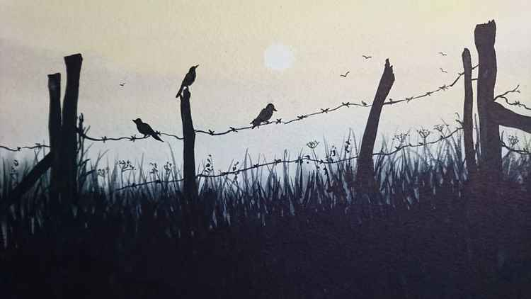 song bird at dawn -