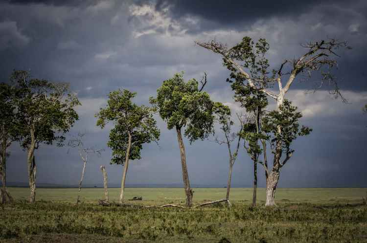 African storm -
