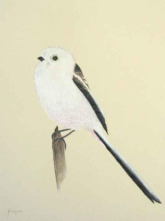 The long-tailed tit (Aegithalos caudatus)