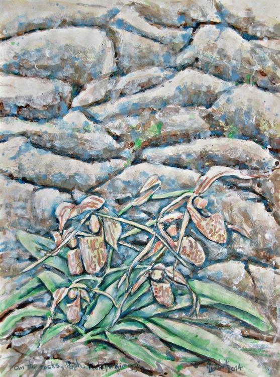 On The Rocks, Paph. kolopakinggii - Image 0