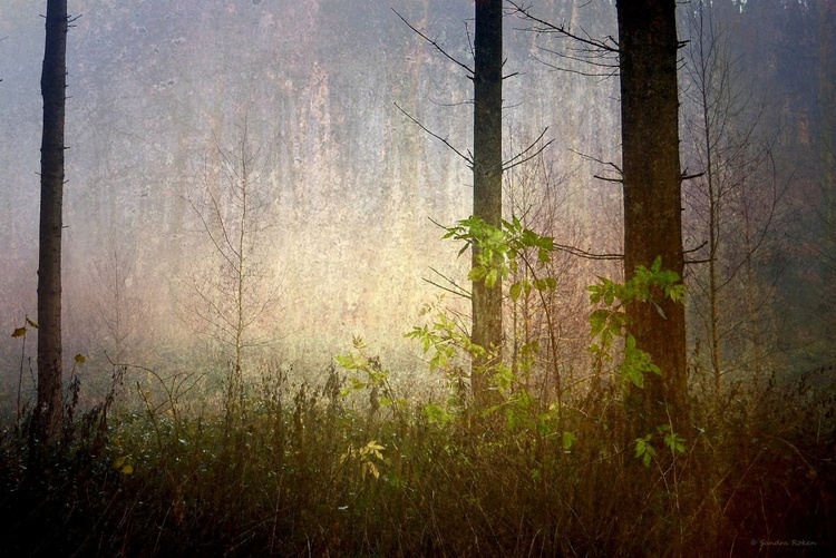 The first Light - Canvas 75 x 50cm - Image 0