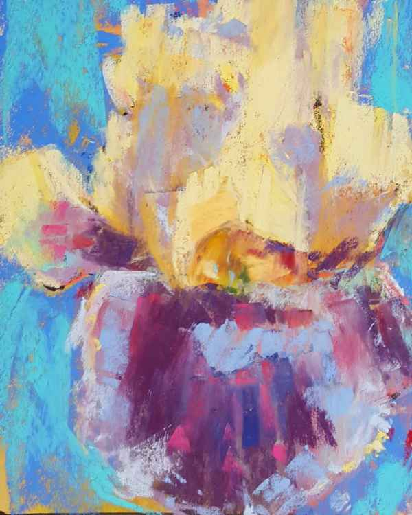 Iris in blues and yellows -