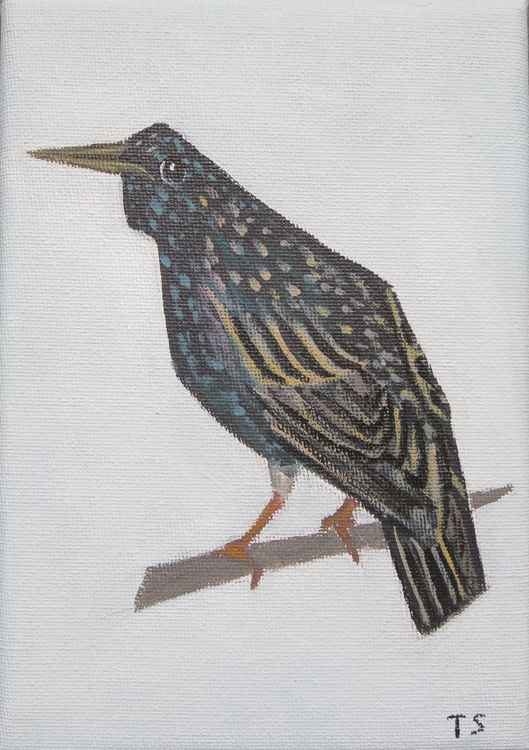 Common starling -