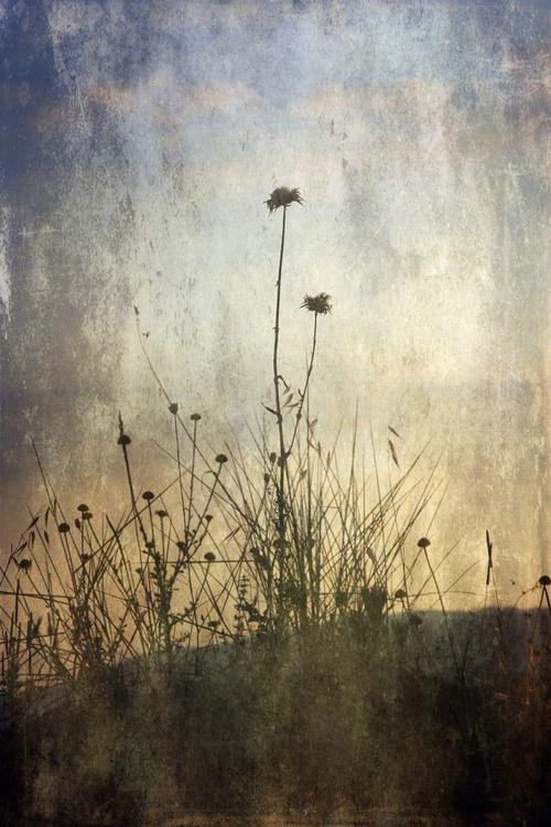 Romantic Nature - Image 0