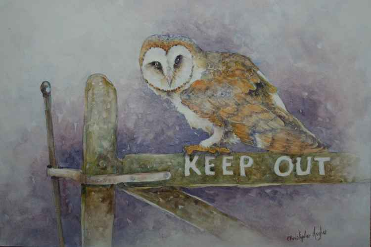 The Barn Owl -