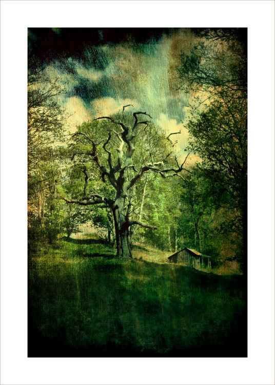Dead tree & Hut