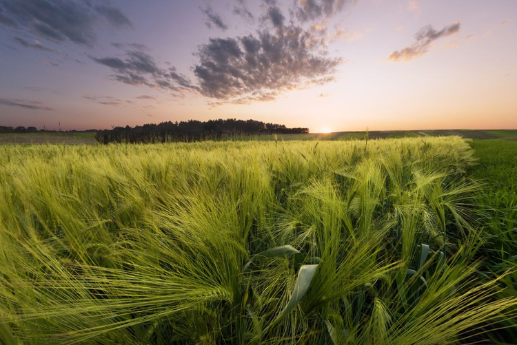 Sunset At The Meadow - Image 0