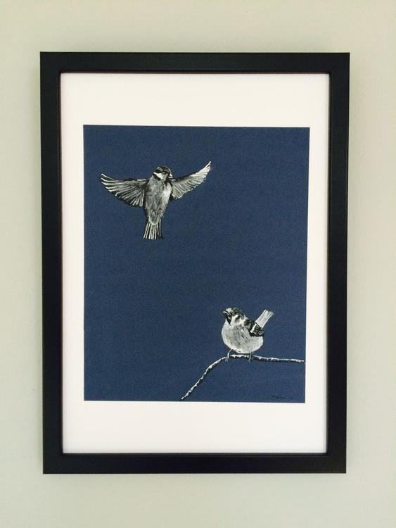 Tree Sparrows - Image 0