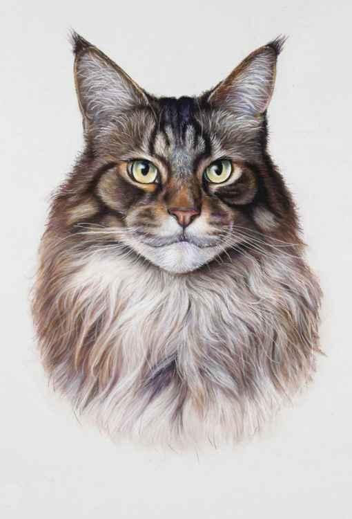 Mr. Cat -
