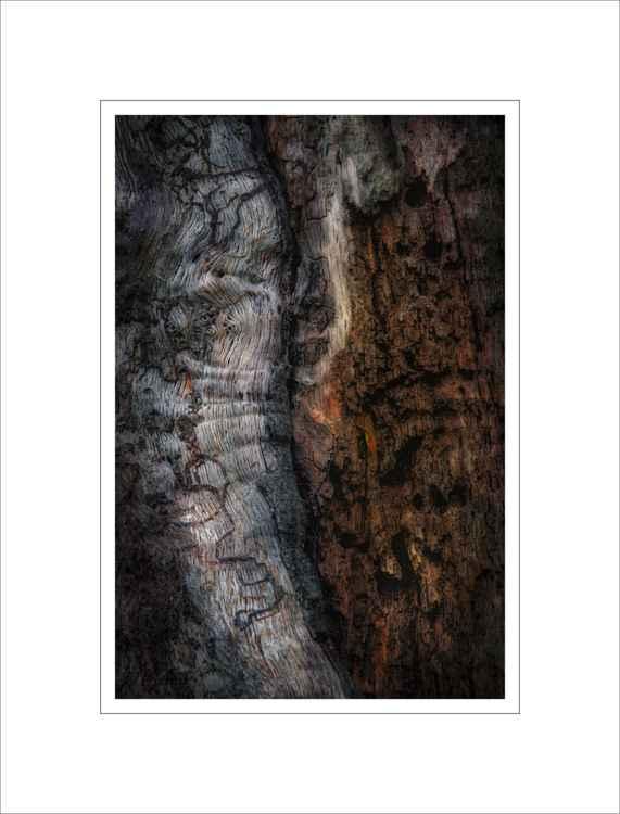 Bark Study 22 -