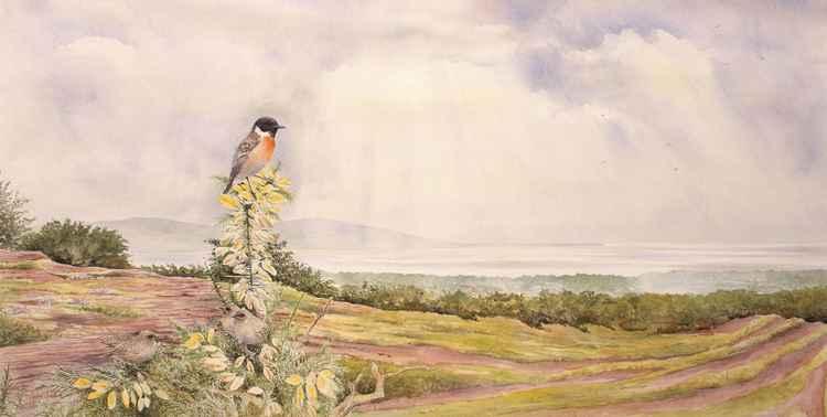 Stonechat, Thurstaston Common, Wirral -