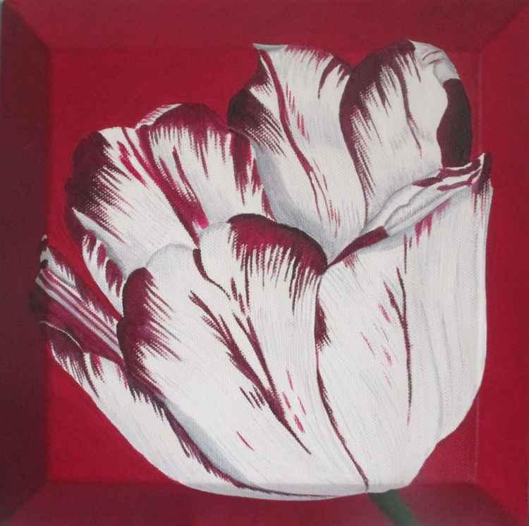 Burgandy Tulip 2