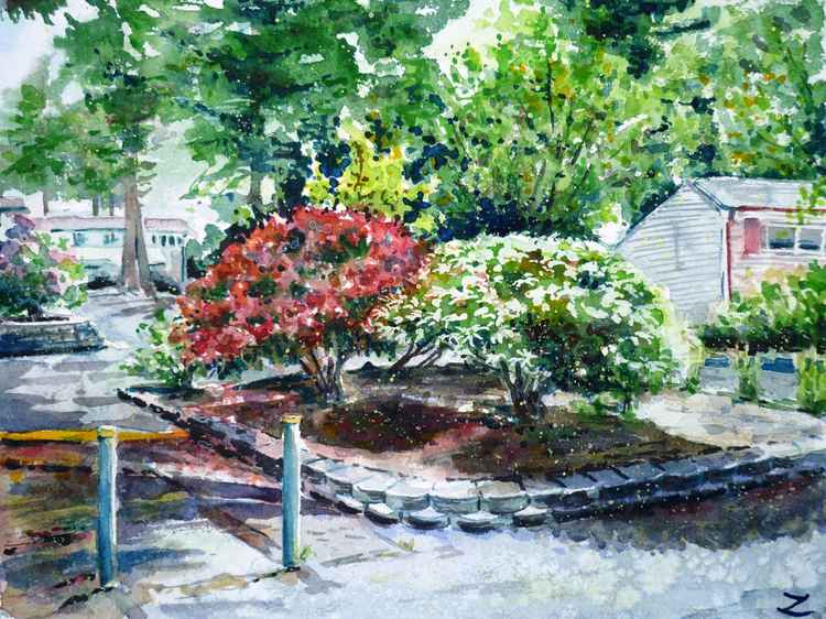 Rhododendrons in the Yard -