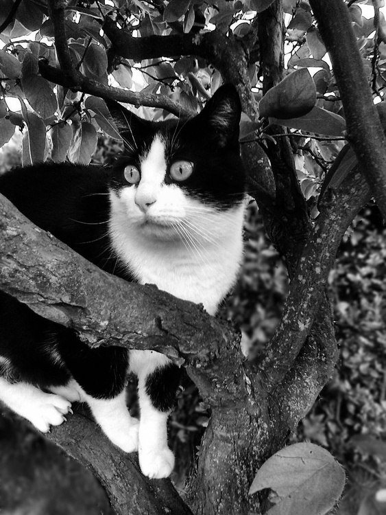Tabby cat on quince tree - Image 0