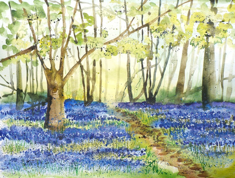 Bluebell Woods - Image 0
