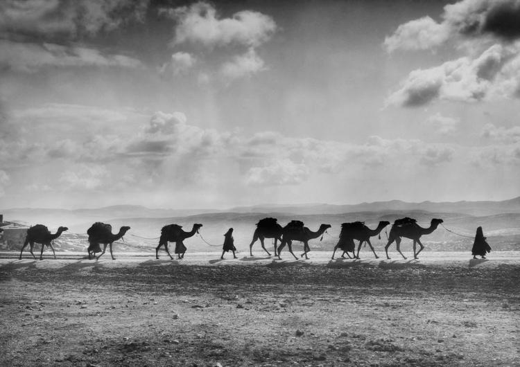 Camel Train - Image 0