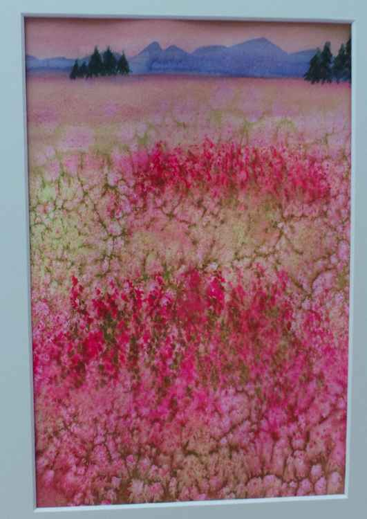 Blushing Fields -