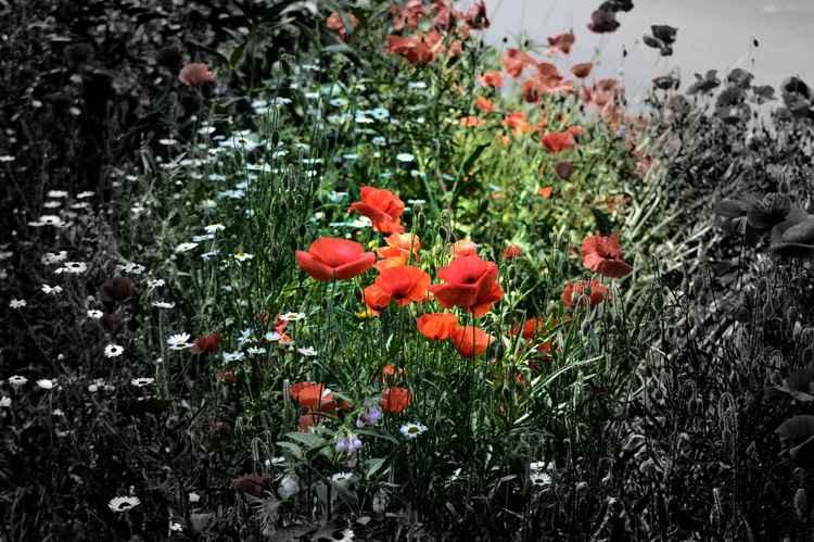 Wildflowers 2 (Paper)